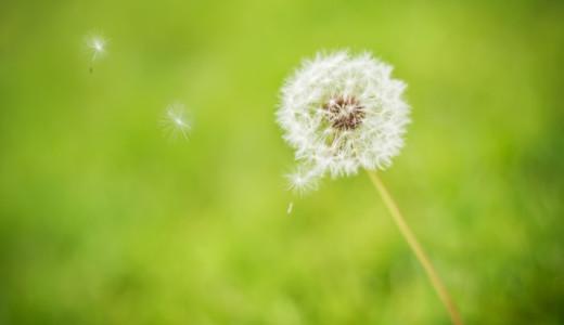2013_03_13 Green dandelion